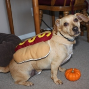 That's our Hot Dog!